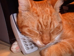 Cat on telephone